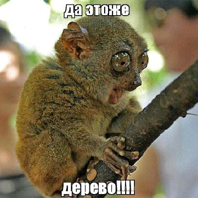 Деревянные чехлы на айфон 8 без предоплаты и доставкой по всей России.